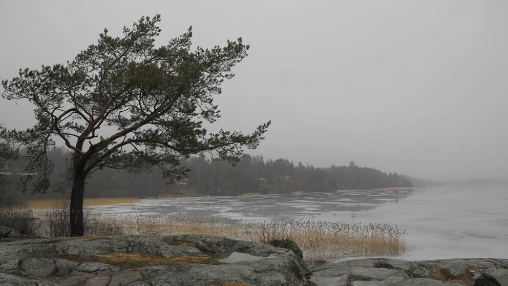 Dimma & Dis vid sjön Drevviken Skogås Huddinge Södermanland 2019.03-07.