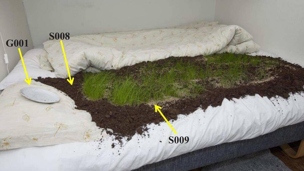 bild på sängen med gräs, jord och tallrik