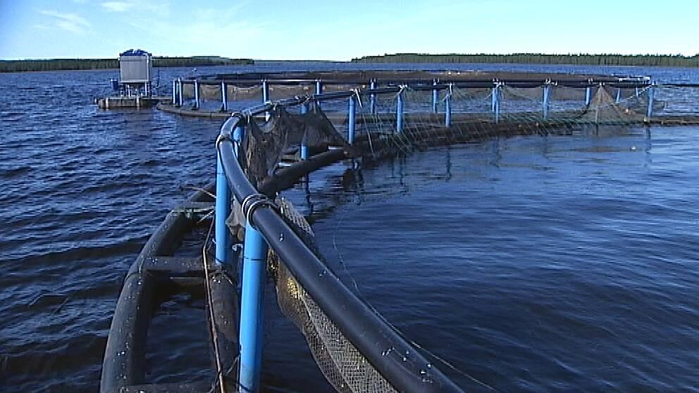fiskodling