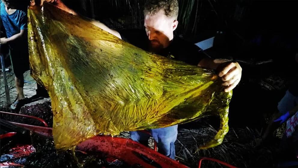 Arbetare på D'Bone Collector Museum hittar stor plastpåse i valen under obduktionen.