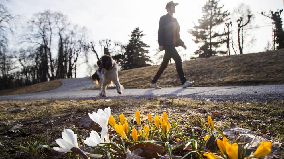 En man promenerar med sin hund i solen.
