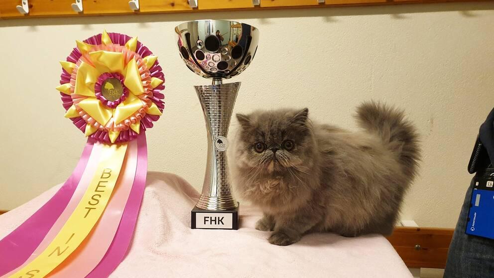 Apple Jack Blueberry Lizen från Onsala utsågs till uställningens finaste katt.