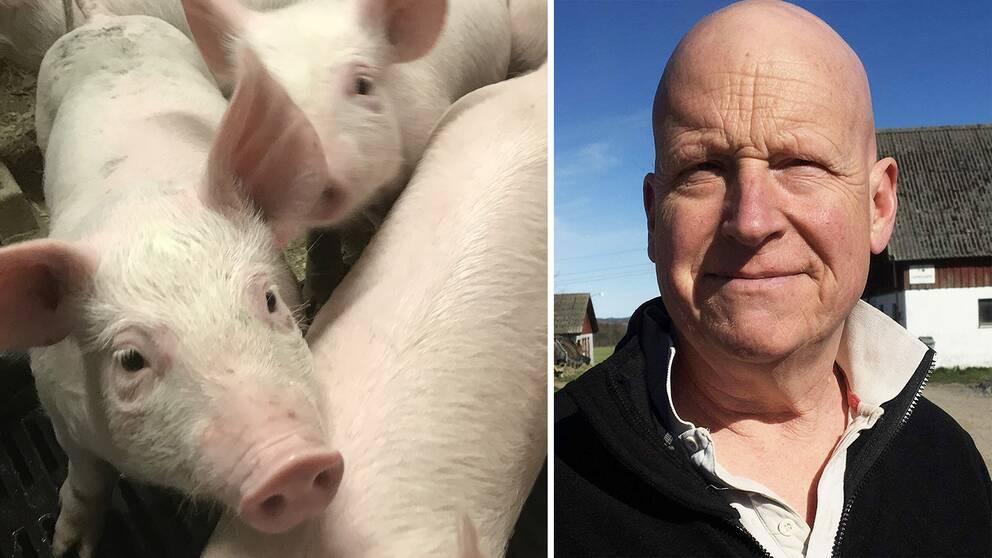 Anders Richardsson är ordförande i LRF Halland. Han har själv grisar.