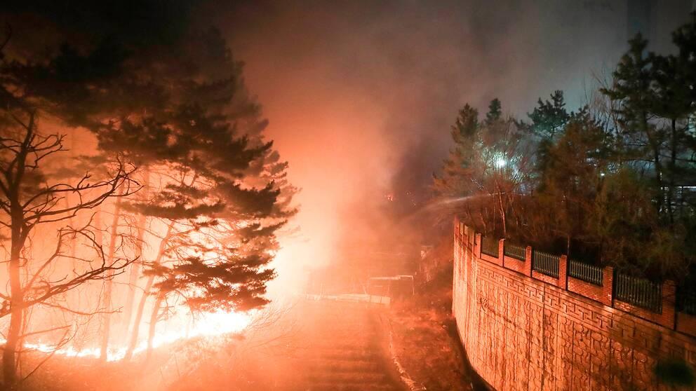 Norra Sydkorea har drabbats av kraftiga skogsbränder.
