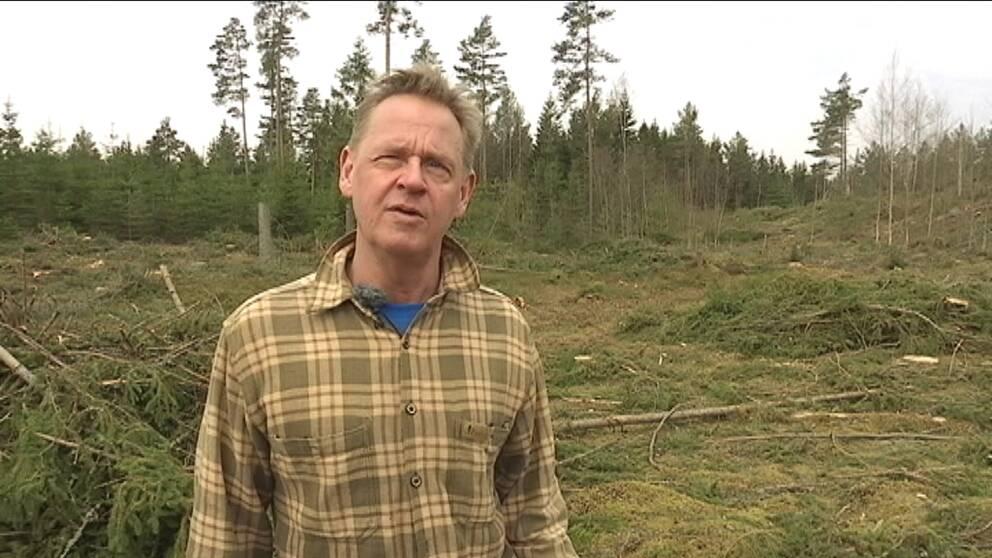 En medelålders man i rutig skjorta och blå t-tröja står mitt i ett kalhygge.