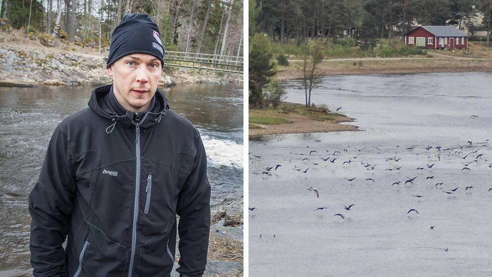 Två bilder. Janne Olsson från Älvkarleby Sportfiskeklubb och skarv utanför Billudden.