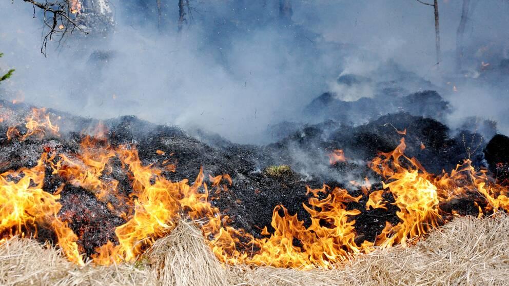 Gräs som brinner och mycket rök.