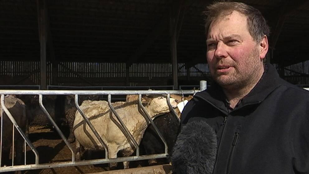 Nötköttsproducenten Johan Svantesson intervjuas. I bakkgrunden syns nötkreatur.
