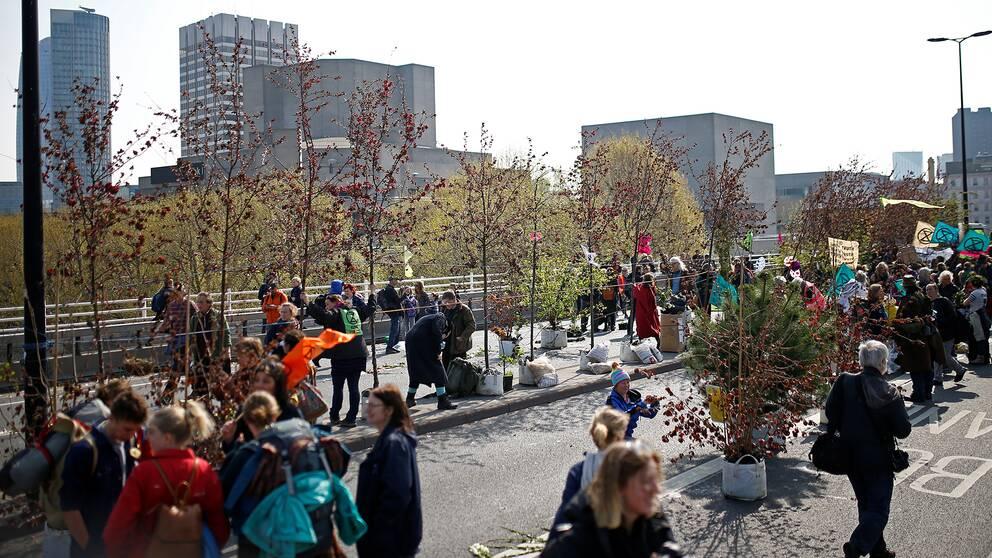 På Waterloo Bridge placerade demonstranterna ut växter för att skapa en spontanträdgård.