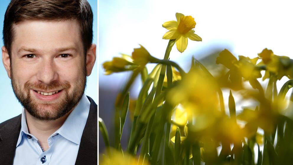 Dubbelbild: porträtt på man med kort skägg, påskliljor i vårsol