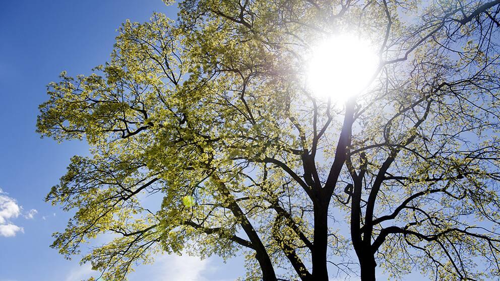 Värme i påsk – risk för gräsbränder