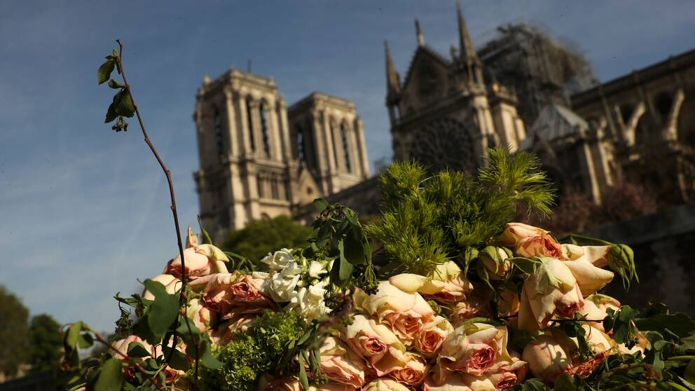 Rosor framför Notre Dame