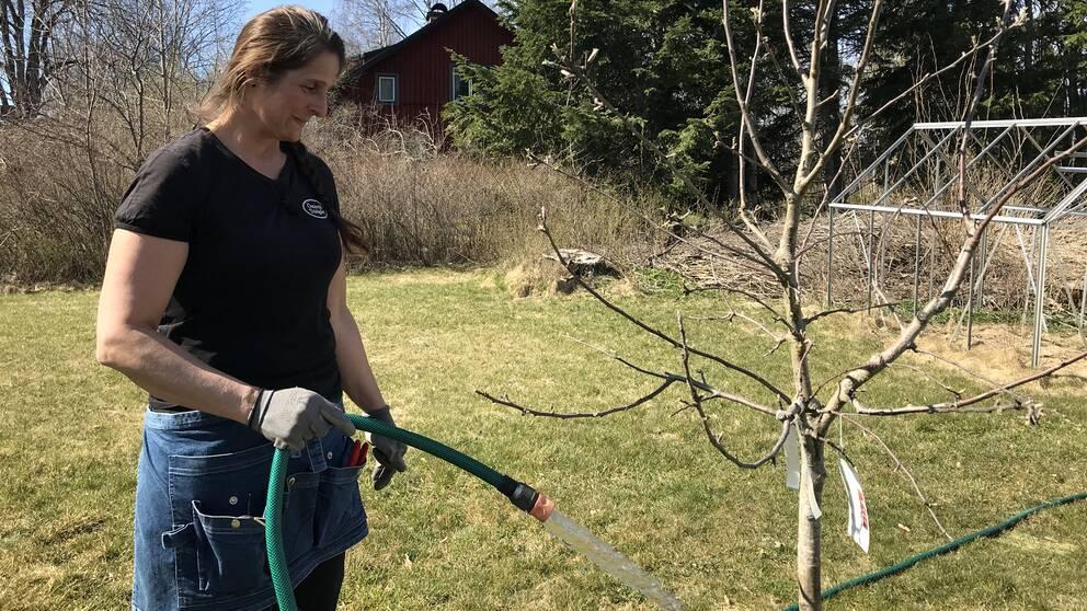 Trädgårdsmästare vattnar träd