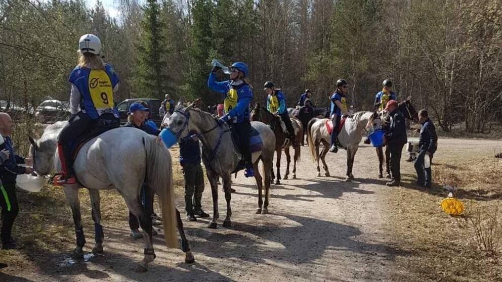 Hästar i skogen med ryttare som dricker vatten.