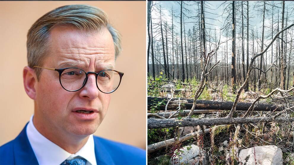 Mikael Damberg (S) och en skog som drabbades av skogsbrand förra året.