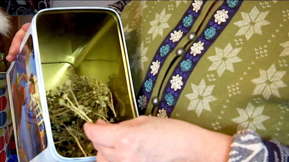 närbild händer som håller burk med torkade växter