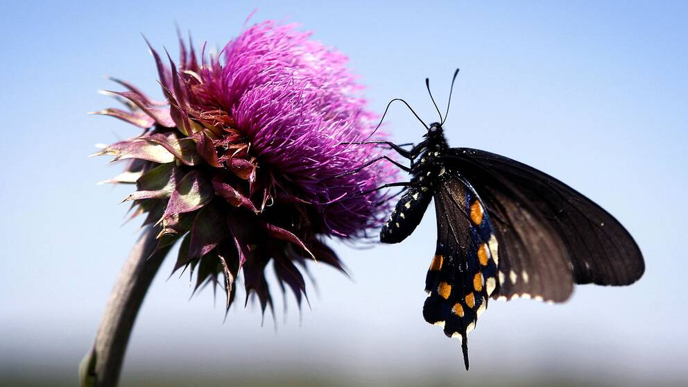 Vissa fjärilsarter och skalbaggar är hotade, enligt en rapport om biologisk mångfald.