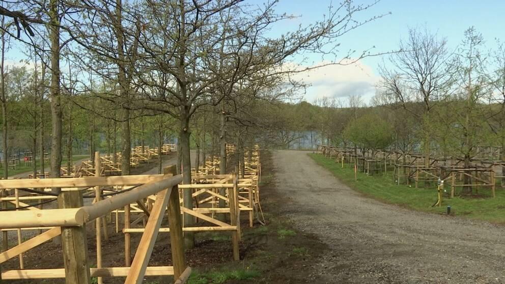 100-tals träd planterade i en plantskola