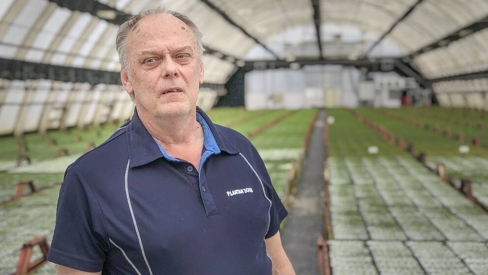 Roger Larm, plantskolechef vid Holmen i Iggesund.