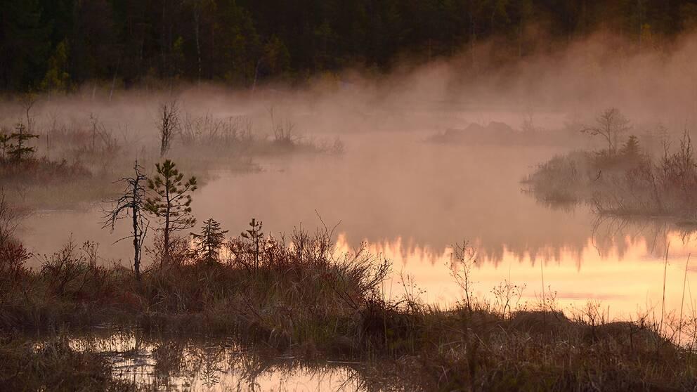 Stämningsfull dimma precis i soluppgången i morse, Gussisjön i Sandarne 2019-05-15.