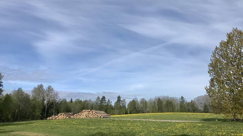 Underbara lätta moln och fältet gult av maskros. Mullsjö Västergötland.