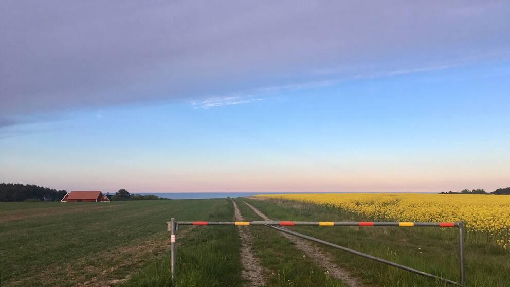 Kväll på Österlen Skåne. Solen på väg ner kl 20.45.