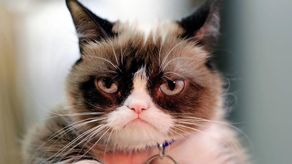 Internetfenomenet Grumpy Cat har gått bort, meddelar hennes familj på Instagram.