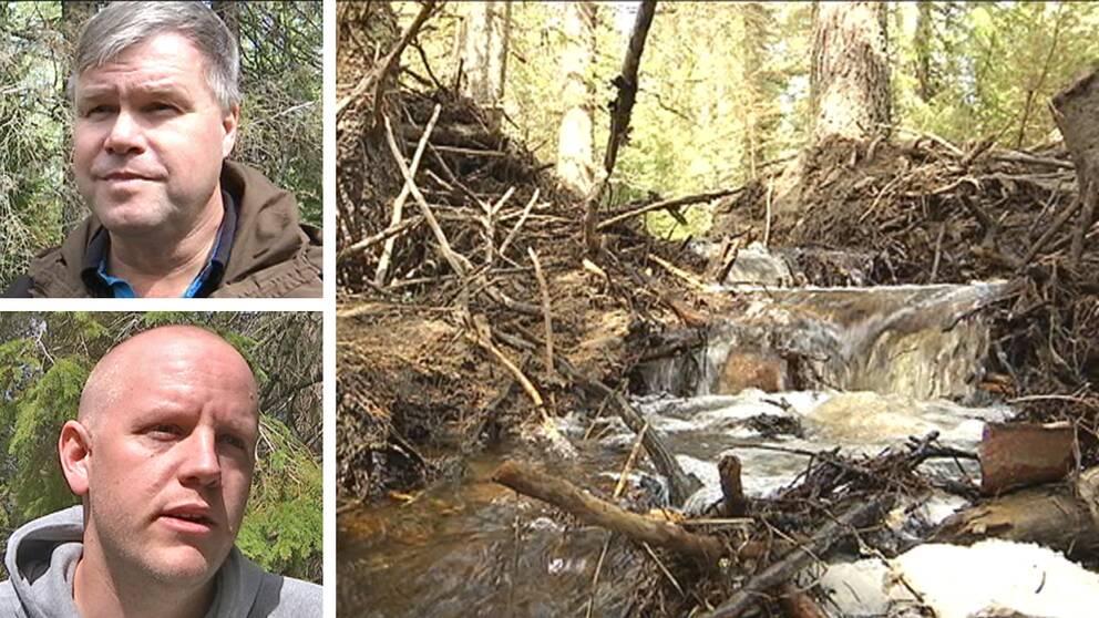 Riven bäverdamm och bild av Jonas Olinder, skogsägare och Jon Hagen, jägare.