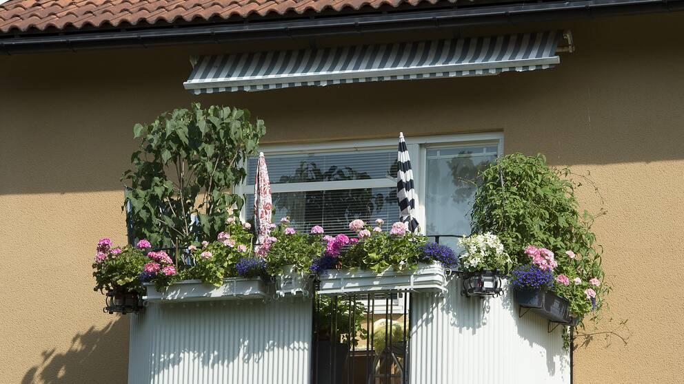 En balkong med blommor.