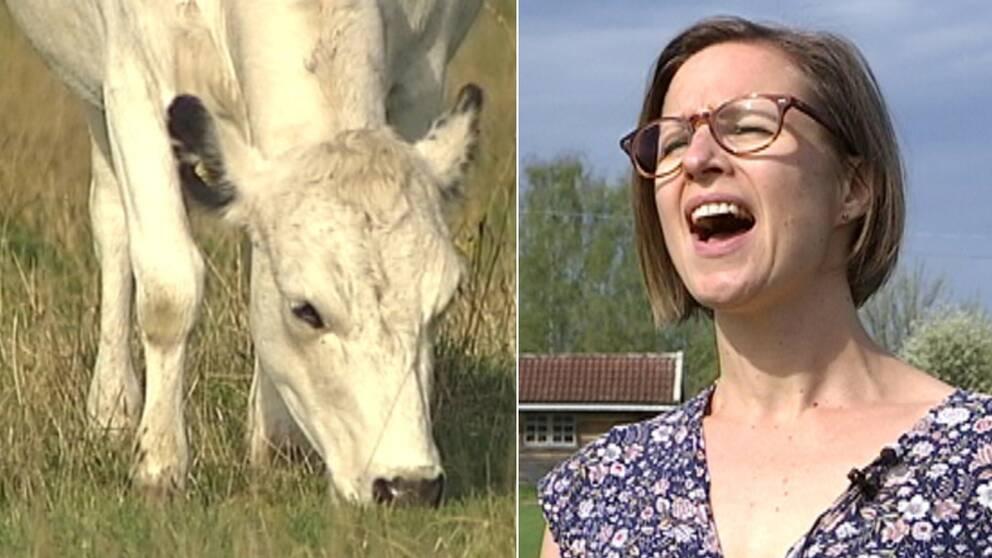 Kvinna som kular, ko som äter gräs