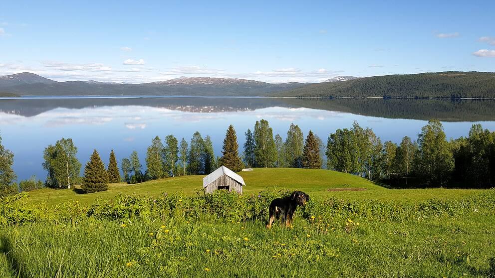 En svart hund på en sommaräng en solig dag i bakgrunden syns en stor spegelblank sjö.
