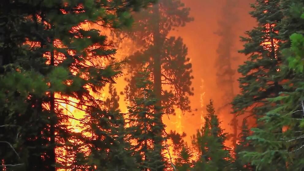 Skogsbränder blir vanligare – hur ska man skydda sig?