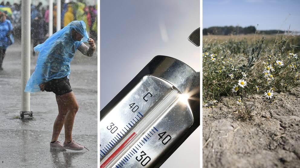 En person i extremt regn håller i sin regnponcho. En termometer visar 35 grader. Uttorkade blommor växer i torr mark.
