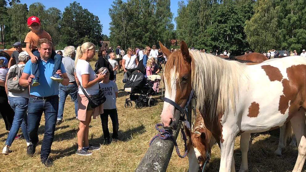 Djurmarknaden i Hästveda arrangeras årligen och är en av de få som finns kvar i landet.