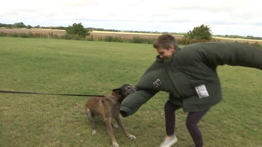 Patrullhund angriper SVT:s reporter