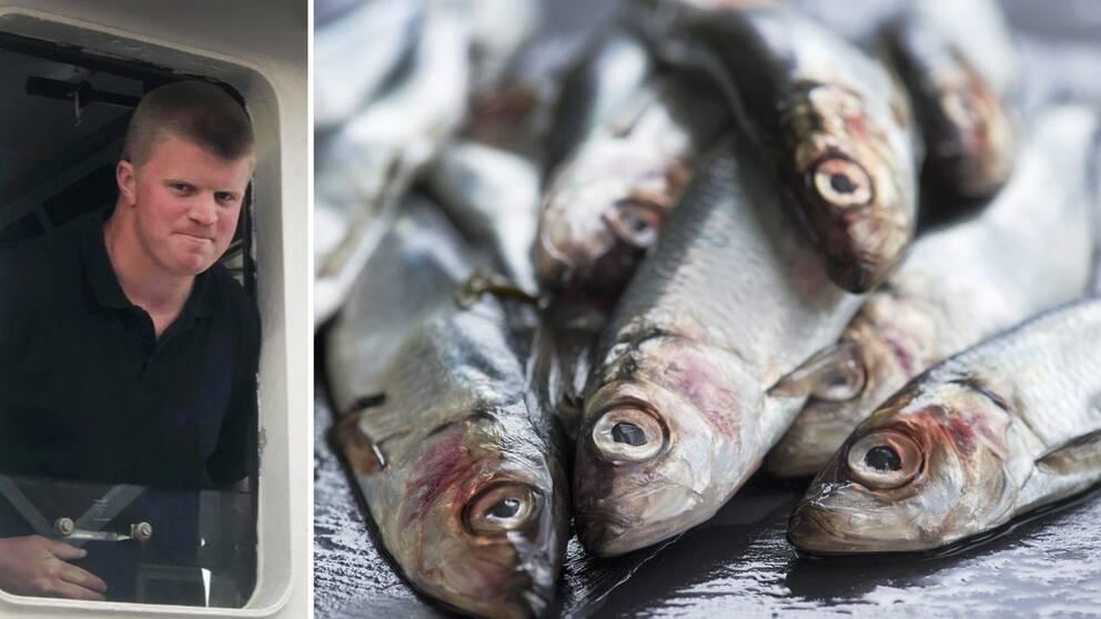Simon Brorsson, 27, från Kungshamn, är inte imponerad av regeringens förslag om kameror på fiskebåtar.