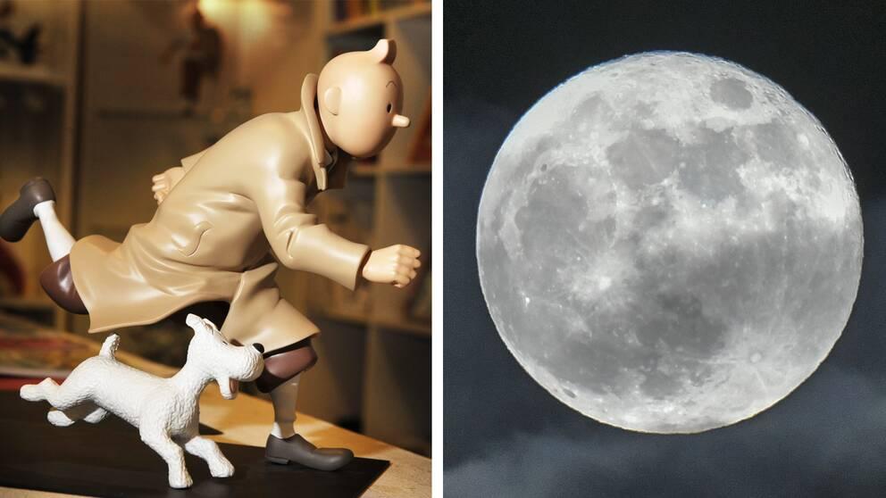 Till vänster: Tintin och Milou. Till höger: supermåne i Malmö 2018.