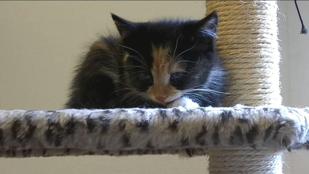 Kattunge vilar på klätterställning