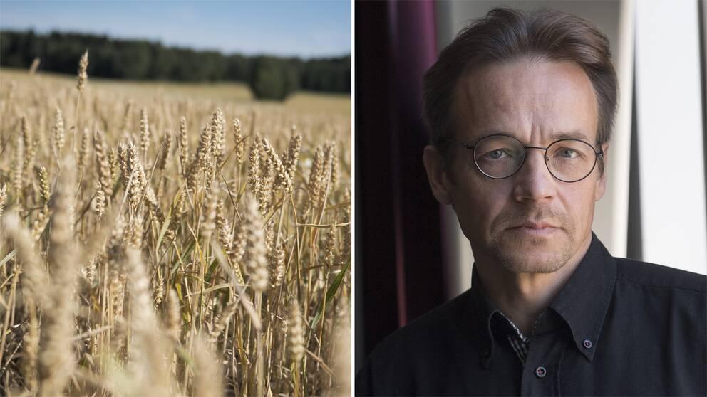 Ett fält, och Markku Rummukainen.