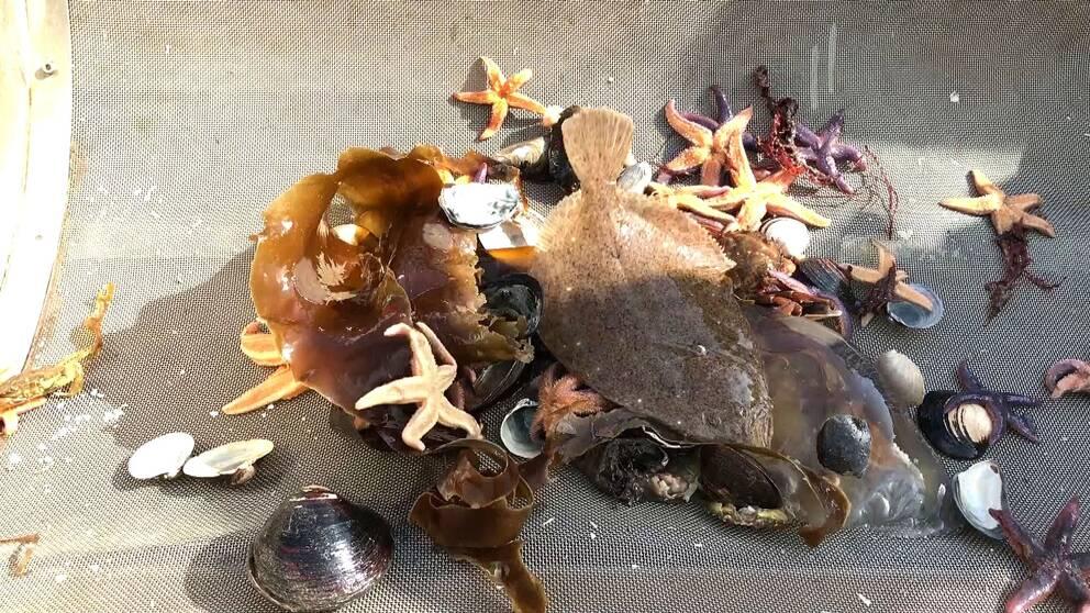 Fiskar, sjöstjärnor och muslor var några av de djur som fanns på havetsbotten