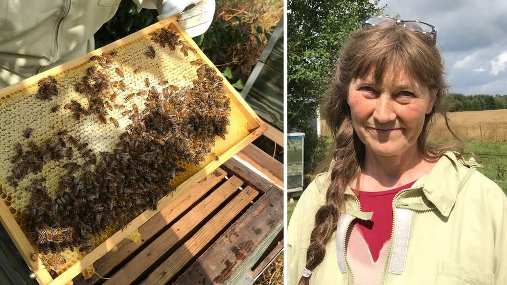 Eva Castell är ordförande i Hallands biodlardistrikt
