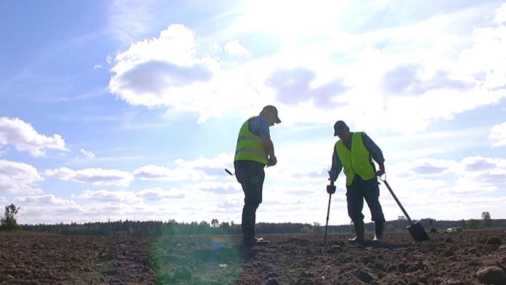 Bilden av vad som hände vid Fjäle myr på Gotland 1361 börjar klarna allt mer. Där försökte gutar hindra den danske kungen Valdemar på hans väg mot Visby. I år är det åttonde året som en grupp arkeologer undersöker platsen.