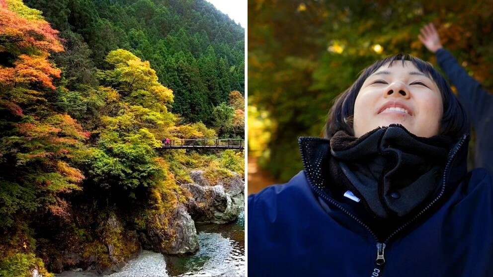 Två foton: det ena på en lövskog under hösten med starka färger av gult, rött och grönt. Det andra på en kvinna i skogen, som har vridit huvudet mot himmelen och blundar.