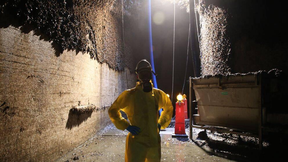 Ringhals kylvattentunnel rensas på musslor.
