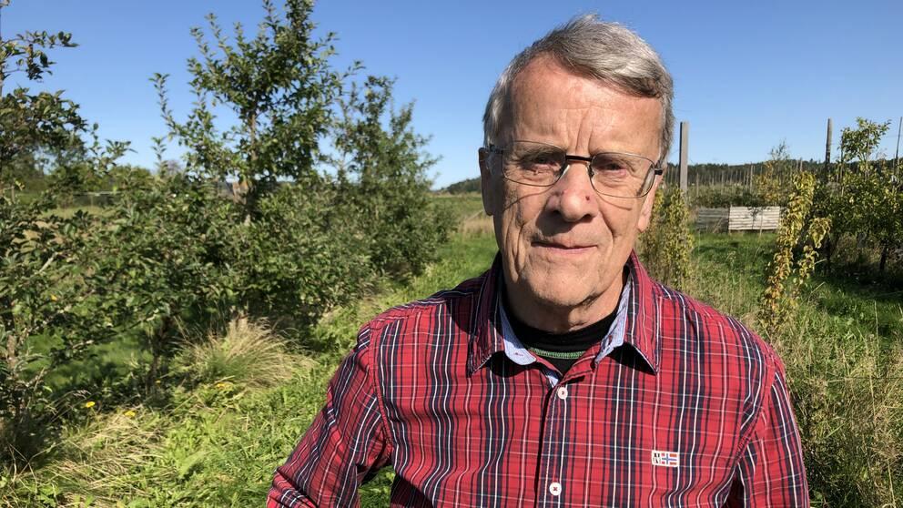 Äppelodlaren Tommy, med grått hår, glasögon och rödrutig skjorta tittar in i kameran. I bakgrunden syns den gröna äppelodlingen och en klarblå himmel.
