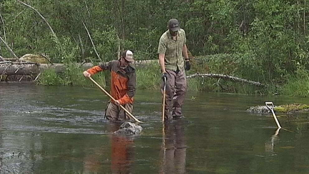 Två personer står i ett vattendrag och håller på med flottrensning