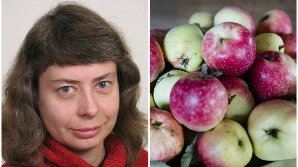 Porträttbild av Kirsten Jensen, rådgivare för yrkesodling av frukt och bär på Länsstyrelsen. Till höger: Svenska äpplen i en hög