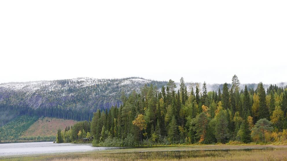 22 Sep.Första snön för säsongen ligger på Hällberget i Offerdal, Krokoms kommun.