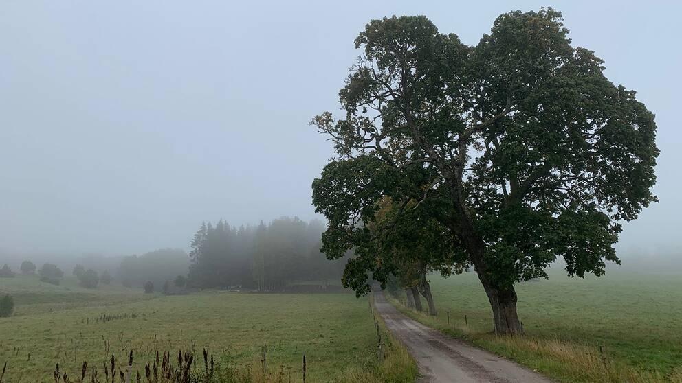 Dimmig morgonpromenad i Sandhem, Mullsjö kommun.