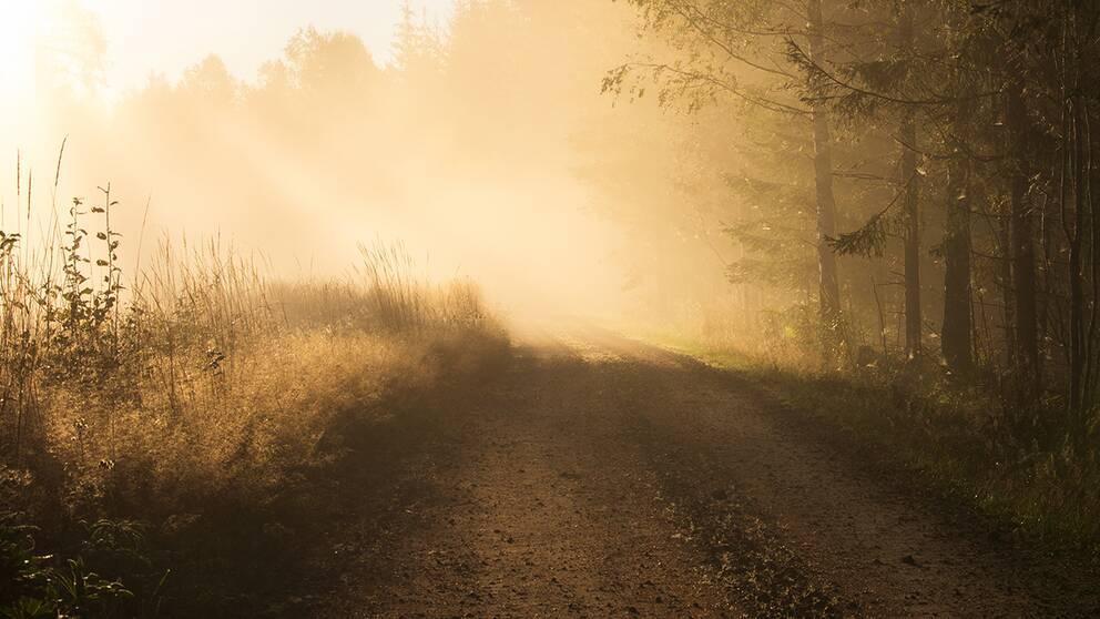 Lördag morgon i Lysvik, Värmland. Solen har precis kommit upp och dimman ligger trolsk över skogen. Lördagen visar sig sen bli solig och varm som en sommardag.